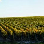 Pauillac- Lynch Bages