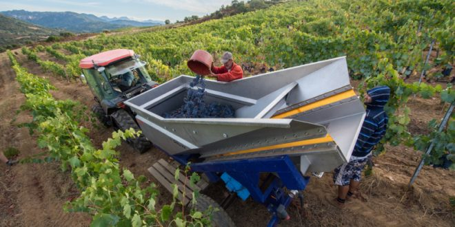 The Early Harvests of Vintage 2017