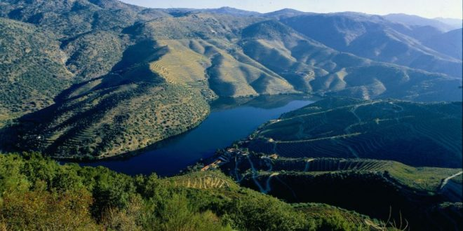 Focus on Port | The Treasure of the Douro
